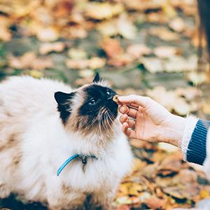 Top Twenty Countries With Most Pet Cats Population